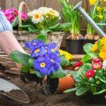 Box Jardinage & Potager à planter soi-même